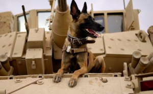 Heroes Among Us: Military Dogs