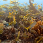 Cuba&#8217;s Gardens of the Queen: the Key to Coral Conservation?