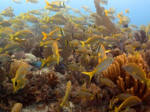 Cuba's Gardens of the Queen: the Key to Coral Conservation?