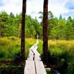 Boggy Green. Rustic beauty of the Viru Bog, Estonia