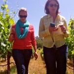 Ayreal Vieux Vineyard
